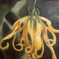 Fleur d Ylang Ylang Vendue HUILE 29/22