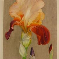 Iris et boutons - Huile
