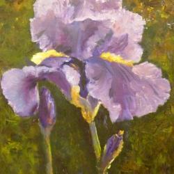 Iris mauve (2)