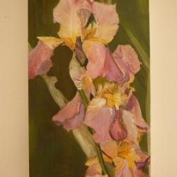 Iris rose - Huile Vendue